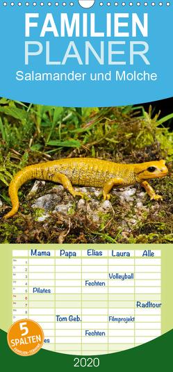 Salamander und Molche – Familienplaner hoch (Wandkalender 2020 , 21 cm x 45 cm, hoch) von Trapp,  Benny