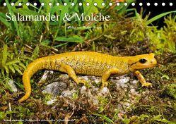 Salamander und Molche (Tischkalender 2019 DIN A5 quer) von Trapp,  Benny