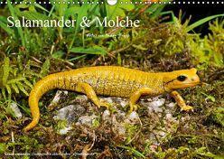 Salamander und Molche (Wandkalender 2019 DIN A3 quer) von Trapp,  Benny