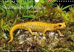 Salamander und Molche (Wandkalender 2019 DIN A4 quer) von Trapp,  Benny