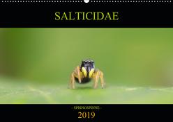 SALTICIDAE Kalender 2019 (Wandkalender 2019 DIN A2 quer) von Daniel Fotografie,  David