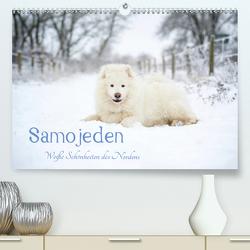 Samojeden – Liebenswerte Fellkugeln (Premium, hochwertiger DIN A2 Wandkalender 2021, Kunstdruck in Hochglanz) von Annett Mirsberger,  Tierpfoto