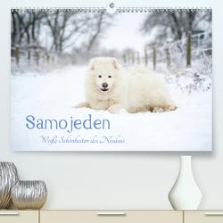 Samojeden – Liebenswerte Fellkugeln (Premium, hochwertiger DIN A2 Wandkalender 2020, Kunstdruck in Hochglanz) von Annett Mirsberger,  Tierpfoto