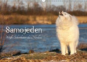 Samojeden – Liebenswerte Fellkugeln (Wandkalender 2018 DIN A3 quer) von Annett Mirsberger,  Tierpfoto