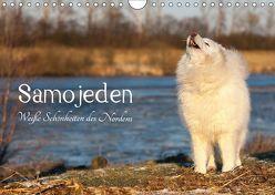 Samojeden – Liebenswerte Fellkugeln (Wandkalender 2019 DIN A4 quer) von Annett Mirsberger,  Tierpfoto