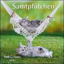 Samtpfötchen 2019 – Broschürenkalender – Wandkalender – Katzenkalender – mit herausnehmbarem Poster – Format 30 x 30 cm von DUMONT Kalenderverlag