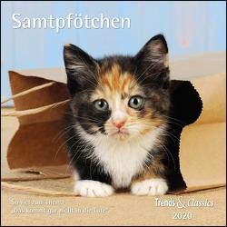 Samtpfötchen 2020 – Broschürenkalender – Wandkalender – Katzenkalender – mit herausnehmbarem Poster – Format 30 x 30 cm von DUMONT Kalenderverlag