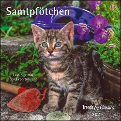 Samtpfötchen 2021 – Broschürenkalender – Wandkalender – Katzenkalender – mit herausnehmbarem Poster – Format 30 x 30 cm
