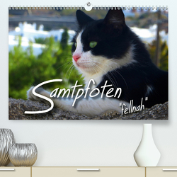 """SAMTPFOTEN """"fellnah"""" (Premium, hochwertiger DIN A2 Wandkalender 2020, Kunstdruck in Hochglanz) von Bleicher,  Renate"""