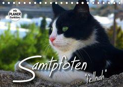 """SAMTPFOTEN """"fellnah"""" (Tischkalender 2019 DIN A5 quer) von Bleicher,  Renate"""