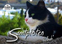 """SAMTPFOTEN """"fellnah"""" (Wandkalender 2019 DIN A3 quer) von Bleicher,  Renate"""