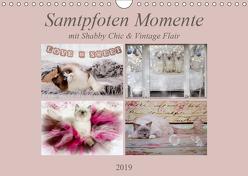 Samtpfoten Momente mit Shabby Chic & Vintage Flair (Wandkalender 2019 DIN A4 quer) von Reiß-Seibert,  Marion