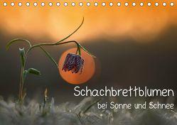 Schachbrettblumen bei Sonne und Schnee (Tischkalender 2019 DIN A5 quer) von Marklein,  Gabi