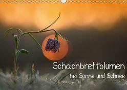 Schachbrettblumen bei Sonne und Schnee (Wandkalender 2019 DIN A3 quer) von Marklein,  Gabi