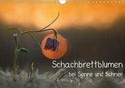 Schachbrettblumen bei Sonne und Schnee (Wandkalender 2019 DIN A4 quer) von Marklein,  Gabi