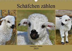 Schäfchen zählen – Lämmchen-Edition (Wandkalender 2019 DIN A3 quer) von Löwer,  Sabine