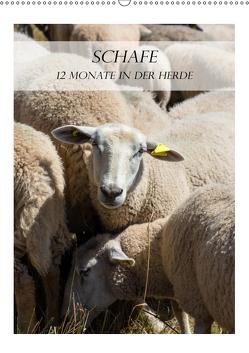 Schafe – 12 Monate in der Herde (Wandkalender 2019 DIN A2 hoch) von und Philipp Kellmann,  Stefanie