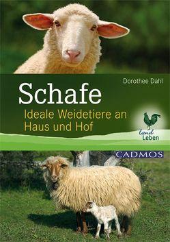 Schafe von Dahl,  Dorothee
