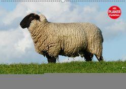 Schafe zählen leicht gemacht! (Wandkalender 2019 DIN A2 quer) von Stanzer,  Elisabeth