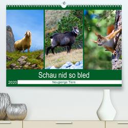 Schau nid so bled (Premium, hochwertiger DIN A2 Wandkalender 2020, Kunstdruck in Hochglanz) von Kramer,  Christa