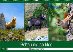 Schau nid so bled (Wandkalender 2019 DIN A2 quer) von Kramer,  Christa