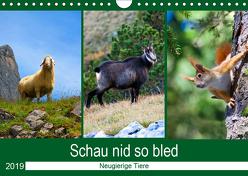 Schau nid so bled (Wandkalender 2019 DIN A4 quer) von Kramer,  Christa
