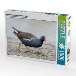 Scheue Teichralle am Ufer eines Sees 1000 Teile Puzzle quer von CALVENDO