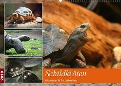 Schildkröten – Gepanzerte Urzeitwesen (Wandkalender 2019 DIN A2 quer) von Mielewczyk,  Barbara