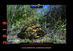 Schildkröten-Jahreskalender 2019 von Geier,  Thorsten, Trapp,  Benny