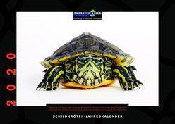 Schildkröten-Jahreskalender 2020 von Geier,  Thorsten, Trapp,  Benny