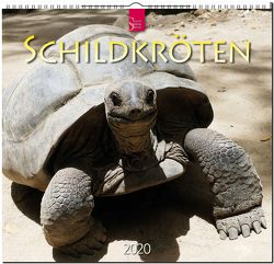 Schildkröten von Redaktion Verlagshaus Würzburg,  Bildagentur