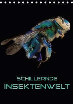 Schillernde Insektenwelt (Tischkalender 2018 DIN A5 hoch) von Bleicher,  Renate