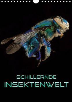 Schillernde Insektenwelt (Wandkalender 2019 DIN A4 hoch) von Bleicher,  Renate