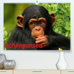 Schimpansen (Premium, hochwertiger DIN A2 Wandkalender 2021, Kunstdruck in Hochglanz) von Stanzer,  Elisabeth