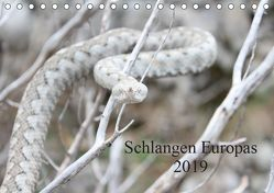 Schlangen Europas (Tischkalender 2019 DIN A5 quer) von Wilms,  Michael