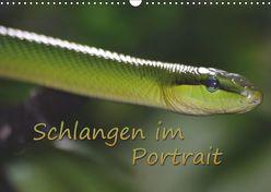Schlangen im Portrait (Wandkalender 2019 DIN A3 quer) von Chawera