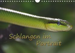 Schlangen im Portrait (Wandkalender 2019 DIN A4 quer) von Chawera