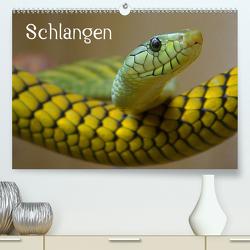 Schlangen (Premium, hochwertiger DIN A2 Wandkalender 2021, Kunstdruck in Hochglanz) von Stanzer,  Elisabeth