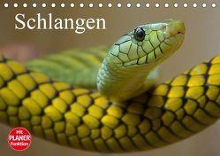 Schlangen (Tischkalender 2019 DIN A5 quer) von Stanzer,  Elisabeth