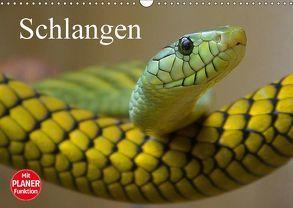 Schlangen (Wandkalender 2018 DIN A3 quer) von Stanzer,  Elisabeth