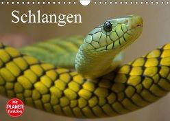 Schlangen (Wandkalender 2018 DIN A4 quer) von Stanzer,  Elisabeth
