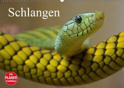Schlangen (Wandkalender 2019 DIN A2 quer) von Stanzer,  Elisabeth