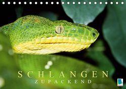 Schlangen: Zupackend (Tischkalender 2019 DIN A5 quer) von CALVENDO