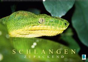 Schlangen: Zupackend (Wandkalender 2018 DIN A2 quer) von CALVENDO