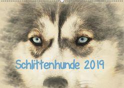 Schlittenhunde 2019 (Wandkalender 2019 DIN A2 quer) von Redecker,  Andrea