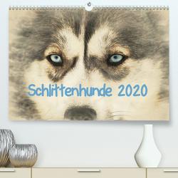 Schlittenhunde 2020 (Premium, hochwertiger DIN A2 Wandkalender 2020, Kunstdruck in Hochglanz) von Redecker,  Andrea