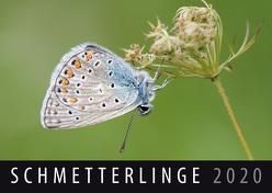 Schmetterlinge 2020 von Quelle & Meyer Verlag