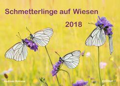 Schmetterlinge auf Wiesen 2018 von Kolossa,  Andreas