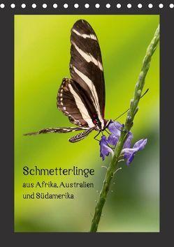 Schmetterlinge aus Afrika, Australien und Südamerika (Tischkalender 2018 DIN A5 hoch) von Behrends,  Wilhelm