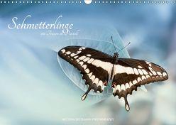 Schmetterlinge – ein Traum in Pastell (Wandkalender 2019 DIN A3 quer) von Dittmann,  Bettina